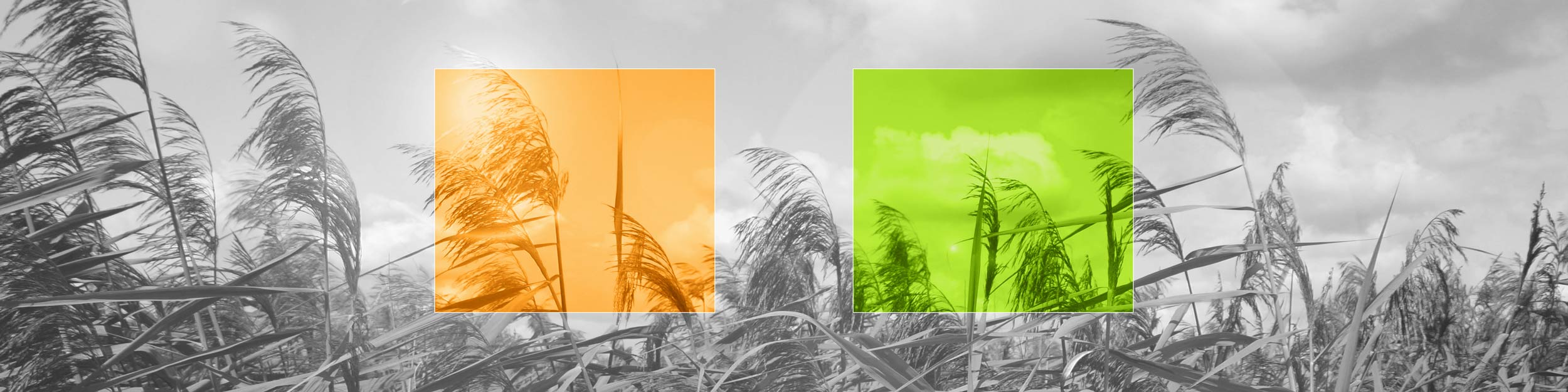 Energiecoöperatie De Wieden-Weerribben